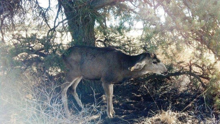 Stuck Buck 4